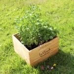 DIY Déco : Créer une jardinière pour 3 fois rien